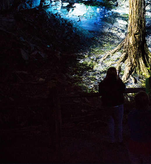 Foresta Lumina - multimedia nighttime experience at Parc de la Gorge de Coaticook